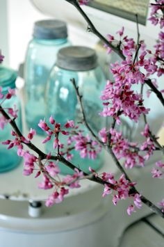Red buds and ball jars