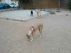 Juegos en el parque canino Juana, Penny, Rumba, Robin y Luna 09/16