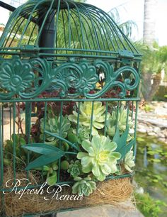 Hanging Succulent Bird Cage - using coconut fiber Colorful Succulents, Hanging Succulents, Succulents In Containers, Succulent Arrangements, Succulents Garden, Planting Flowers, Hanging Bird Cage, Bird Cages, Birdcage Planter