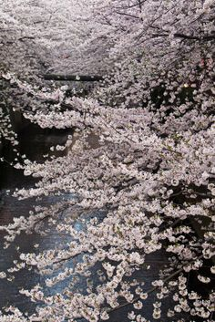Tokyo Sakura - 2010-35