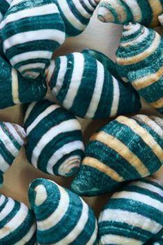 ❤️ sea shells