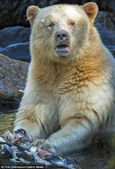 Mr Svensson said the bears were actually very nice and calm when he was taking the pictures