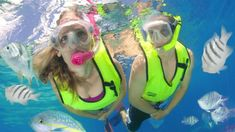 What a way to spend your day!  Snorkel, snorkel, snorkel!