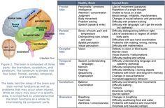 brain functions chart   Brain Parts -   Science   School ...