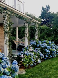 Nantucket by Design 2017 - Quintessence Hydrangea Landscaping, Farmhouse Landscaping, Farmhouse Garden, Garden Cottage, Front Yard Landscaping, Landscaping Ideas, Cottage Front Yard, Arizona Landscaping, Garden Front Of House