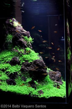 2014 AGA Aquascaping Contest - Entry #450