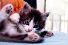 Source: Flickr / marionovakphoto - http://www.flickr.com/photos/marionovakphoto/8019535378/in/pool-cats-cats-cats