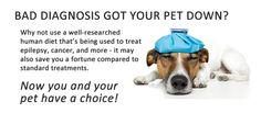 Alternative pet treatment.