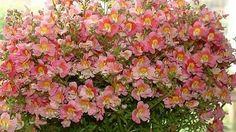 Se você não abre mão de vasos ou jardins floridos, a melhor opção é escolher espécies que sobrevivem aos mais baixos índices de umidade