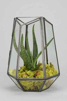 Magical Thinking Hexagonal Terrarium