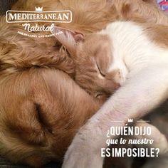 ¿Quién dijo que lo nuestro era imposible? / Who said that is impossible? / Amor Perruno / Mediterranean Natural / perro y gato / dog and cat / frases / citas / quotes