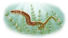This image shows an artist%u2019s depiction of Parviraptor estesi, a snake that lived during the Upper Jurassic or Lower Cretaceous periods, swimming in a freshwater lake with snails and algae. The fossil of this snake was found in Purbeck Limestone, in Swanage, England.