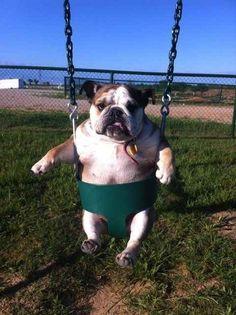 Cachorro absolutamente extasiado por estar no playground.