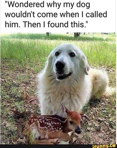 The best dog memes of 2019 by Small Animals. Enjoy the funny dogs meme. Cute Animal Memes, Animal Jokes, Cute Animal Pictures, Cute Funny Animals, Funny Cute, So Cute Meme, Funny Dog Memes, Funny Dogs, Cute Dogs And Puppies