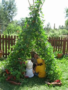 Bean Teepee - 12 Amazing Living Structures You Can Create!