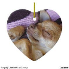 Effective Potty Training Chihuahua Consistency Is Key Ideas. Brilliant Potty Training Chihuahua Consistency Is Key Ideas. Labrador Retriever, Golden Retriever, Retriever Puppies, I Love Dogs, Cute Dogs, Dachshund Funny, Chihuahua Puppies, Chihuahuas, Aggressive Dog