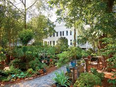 Suzanne and Robert Currey had spent all their married years abuzz in the sensible hive of Atlanta. Then one day, they got carried away and bought a grand, neglected house in rural Georgia. Georgian, The Expanse, Old Houses, Restoration, Architecture, House Styles, Plants, June, Gardens