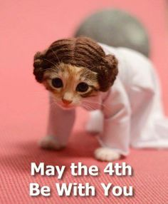 May the 4th be with you ! #cat #starwars #funny #leila