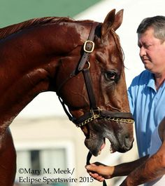 """Dortmund is the master of the """"side eye,"""" practices it at CD for next week's @PreaknessStakes at @PimlicoRC @ABRLive"""