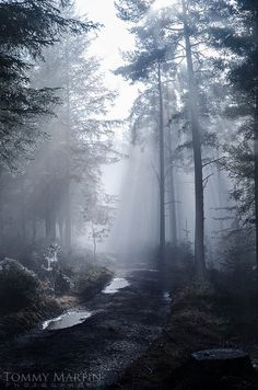 Beacon Edge Woods, Penrith, Cumbria, England-- This reminds me of where Harry summons his patronus in prisoner of azkaban Wonderful Places, Beautiful Places, Peaceful Places, All Nature, English Countryside, Cumbria, Lake District, Nature Pictures, Beautiful Landscapes