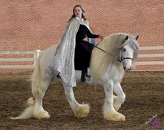 Dunbrody, a gorgeous grey tobiano Gypsy Vanner (AKA Gypsy Cob) stallion