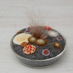 Moldy Petri Dish  by elin art