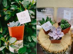 Taylor and Shaun Las vegas wedding » blushbyb.com love this idea: plants as take home gifts