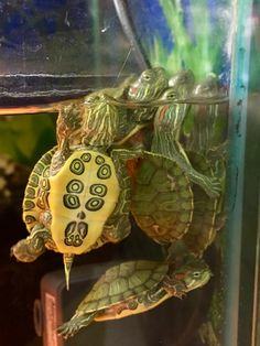 Hanging out together Pet Turtle, Turtle Love, Cute Little Animals, Cute Funny Animals, Beautiful Creatures, Animals Beautiful, Cute Baby Turtles, Kawaii Turtle, Cute Ducklings