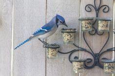 Cool Garden Fence Decoration Ideas – Page 3 of 5 – Metal Plant Hanger Tea Candle Holders, Tea Candles, Ikea Socker, Diy Bird Feeder, Bird Feeder Hangers, Garden Projects, Garden Ideas, Backyard Ideas, Garden Art