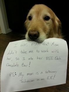 Dog shame: My poor bad dog Connor! He ate the rest of my dark chocolate bar! Even perfect dogs have bad days. He wasn't too happy when I had to make him vomit. Bad me for leaving it out. Funny Animal Memes, Dog Memes, Animal Quotes, Funny Animal Pictures, Cute Funny Animals, Funny Dogs, Cute Pictures, Dog Funnies, Animal Funnies