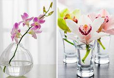 Tipos de orquídeas. Flores dentro de casa. Como cultivar flores.