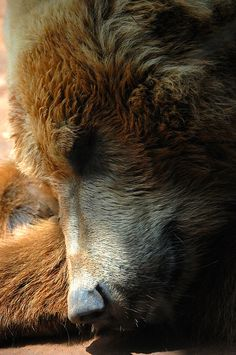 Sleeping bear by http://herthen.tumblr.com