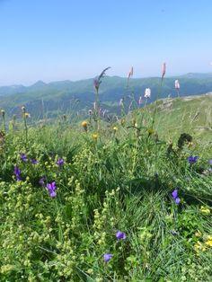 Lioran, Auvergne.