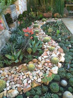 02 Stunning Spring Garden Ideas for Front Yard and Backyard Landscaping Outdoor Cactus Garden, Succulent Rock Garden, Succulent Landscaping, Landscaping With Rocks, Front Yard Landscaping, Planting Succulents, Outdoor Gardens, Landscaping Ideas, Succulent Plants