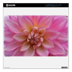 Pink Dahlia Skin For The MacBook Air by Paul Stickland for Flower Barrow on Zazzle.