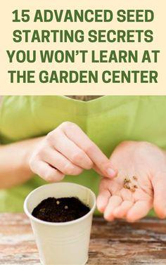 Gardening For Beginners, Gardening Tips, Indoor Gardening, Organic Gardening, Outdoor Plants, Outdoor Gardens, Starting Seeds Indoors, Home Vegetable Garden, Growing Vegetables
