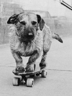 size: Photographic Print: Dog Riding Skateboard Poster by Bettmann : Gray Aesthetic, Black Aesthetic Wallpaper, Black And White Aesthetic, Black And White Picture Wall, Black N White, Black And White Pictures, White Art, Pure White, White Aesthetic Photography
