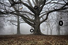 Trees: It would be great to find a home with trees like this. -- ummm yeah..great and SCARY!!! I can just see an Axe murderer coming out of the fog!!