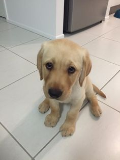 adorable puppy is sad