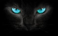 Turquoise Wallpaper | Cat turquoise eyes Wallpapers Pictures Photos Images