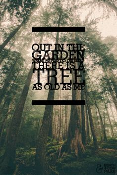"""The Cinematic Orchestra""""Out in the garden where we planted the seeds, there is a tree as old as me."""""""