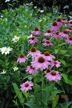 cottage garden plantings