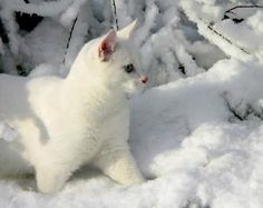 a venit iarna....
