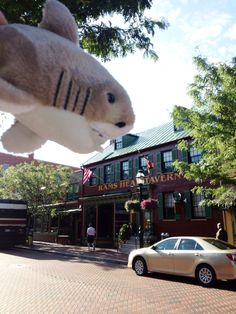 #SharkWeek has arrived in Annapolis.