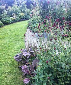 rain garden shrubs and trees Garden Shrubs, Garden Plants, Garden Landscaping, Painting The Roses Red, Rooftop Garden, Garden Borders, Edible Garden, Dream Garden, Rain Garden