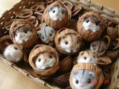 Hazelnut felt mice silly people that is a walnut shell! Needle Felted Animals, Felt Animals, Wet Felting, Needle Felting, Walnut Shell Crafts, Acorn Crafts, Felt Mouse, Nature Crafts, Felt Art