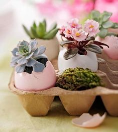 Sedums and violets planted in soil-filled, dyed Easter eggs say spring in a simple way. Moss fills empty spots in the carboard egg carton.