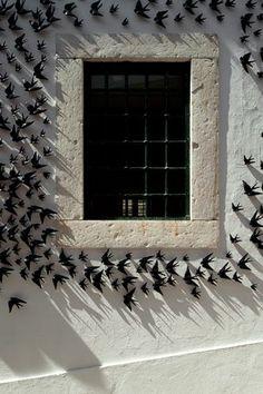 black and white - window - Swallows