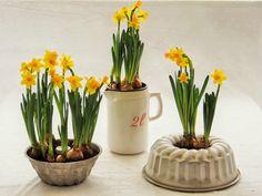 Peggyn pieni punainen keittiö: Aprikoosi-valkosuklaapiirakka ja pääsiäisen kukkal...