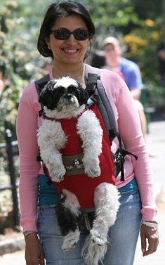 Pupoose! New dog carrier lets the avid shopper take that little puppy along - risk free